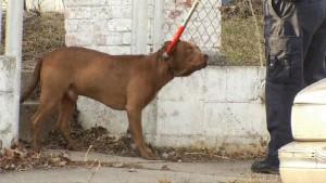 020715-dog-bite_24624