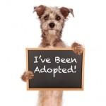 Terrier Mix Dog Holding Adoped Sign