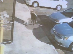 Hero dog saves from shooter