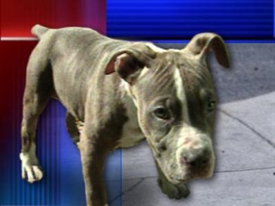 ed7a27bfffe47 Holly Hill man stabs neighbors  pit bulls during attack on his dog