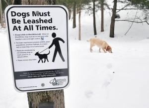 Dog-ordinance-molly2