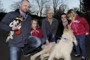 Donor dog 1602.jpg-pwrt2