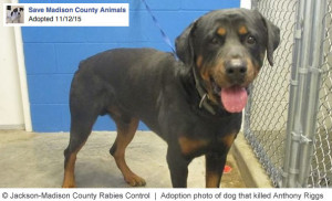 adopted-rottweiler-killed-anthony-riggs-jrc-1