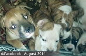 college-springs-boy-killed-by-pit-bull-mix-5