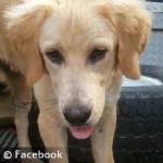 fatal-dog-mauling-family-dog-2