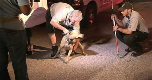 An animal services officer takes a canine to safety after what police raided the largest dog-fighting ring in Apopka history. (Photo credit: WFTV.com)