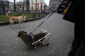 home-made-dog-wheelchair