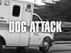 s-dogattack