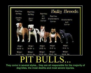 pit bull type dogs