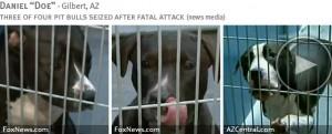 daniel-doe-2013-fatal-pit-bull-attack-photos