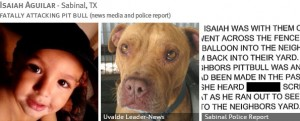 isaiah-aguilar-2013-fatal-pit-bull-attack-photos