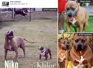 niko-khloe-btm-kennels (1)