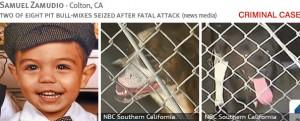 samuel-zamudio-2013-fatal-pit-bull-attack-photos