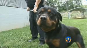 Rottweiler that killed Nyhiem Wilfong