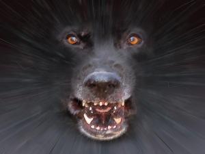 Attack dog ILLUS.jpg