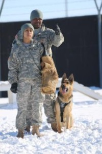 Sgt. Melissa Parrish Sgt. Earl Thomas, a military working dog handler, with 525th Military Police Detachment out of Wiesbaden, Germany, and Pfc. Cindy Ortiz, with the 100th Military Working Dog Detachment stationed out of Miesau, Germany, perform bite training with Staff Sgt. Lex, an explosive detection working dog, Jan 15 at Camp Bondsteel, Kosovo. They are currently assigned to Multinational Battle Group-East as part of Kosovo Force 19.