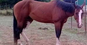 635518566669070129-paisley-horse