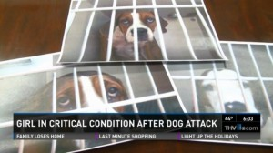 Arkansas pit bull attack