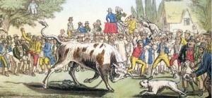 Bull-baiting-300x139