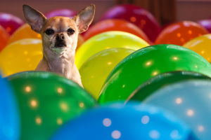 Chi and balloons