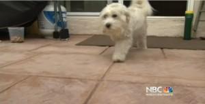 NBC dog attack