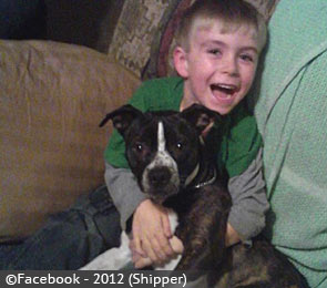 college-springs-boy-killed-by-pit-bull-mix-2