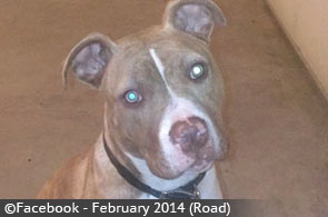 college-springs-boy-killed-by-pit-bull-mix-4