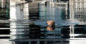 drowningdog2