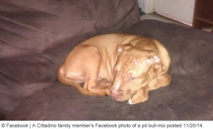 family-pit-bull-kills-baby-marshall-new-york-1