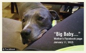 family-pit-bull-kills-dallas-baby