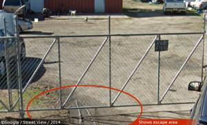 google-street-view-fatal-pit-bull-attack-pine-bluff-1