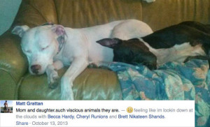 matt-grattan-comments-vicious-family-pit-bulls