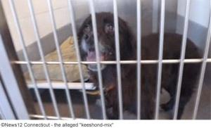 mixed-breed-kills-owner-stratford-3