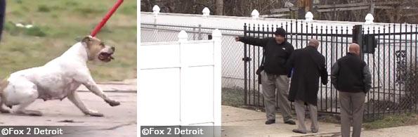 pit-bulls-kill-boy-detroit-2